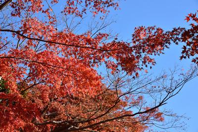 Genjiyama_park_2017al_2002
